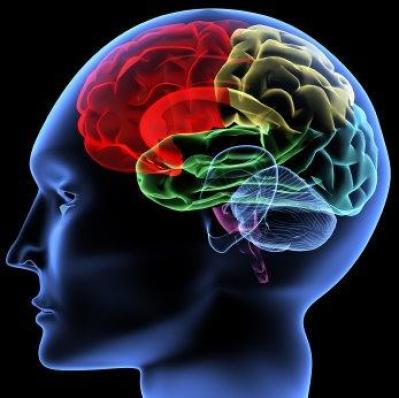 Neurosifilis Adalah Infeksi Otak