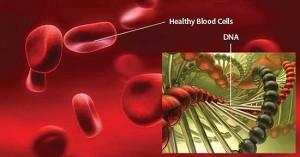 Mengetahui Tentang Sel Darah