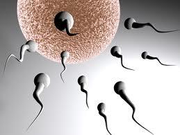 Hormon Testosteron Pada Pria