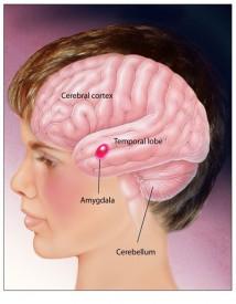 Gangguan Fungsi Otak Pada Penderita Autisme