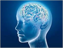 Penyebab Penurunan Fungsi Otak Manusia